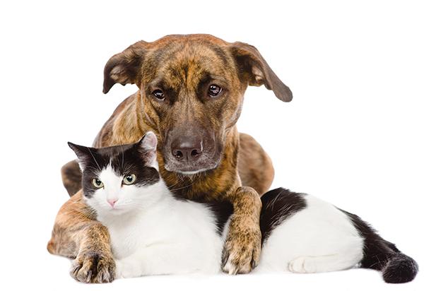 chien-et-chat