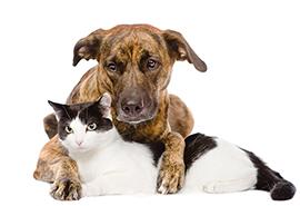 chien-et-chats